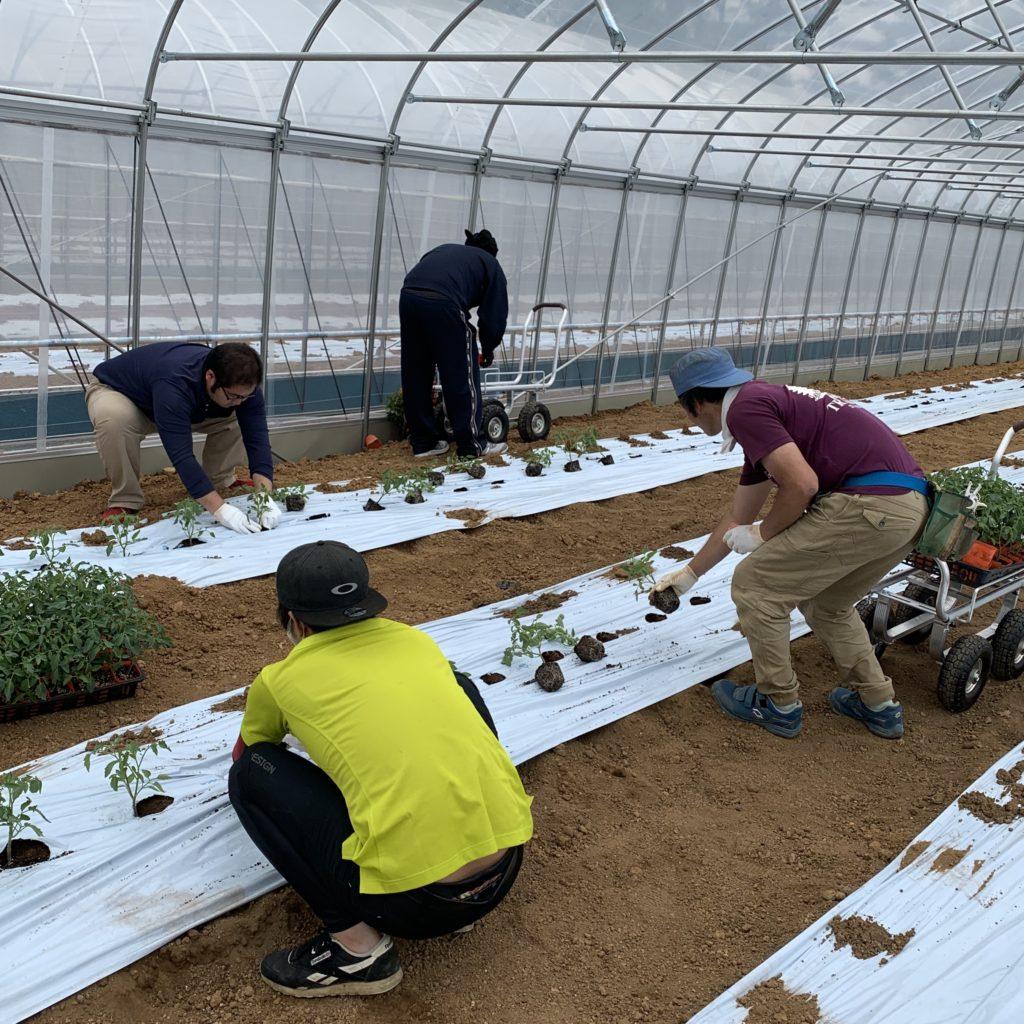 ミニトマトの苗を植えました!